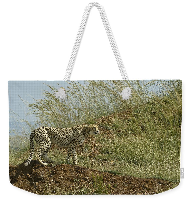 Africa Weekender Tote Bag featuring the photograph Cheetah On The Prowl by Michele Burgess