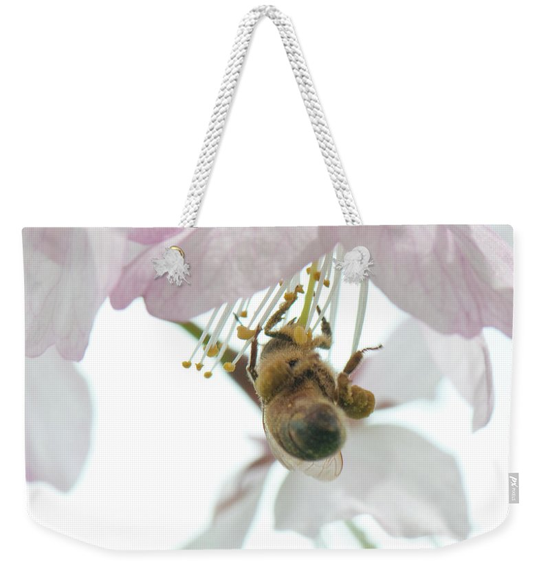 Photography Weekender Tote Bag featuring the photograph Cherry Blossom With Bee by Steven Natanson