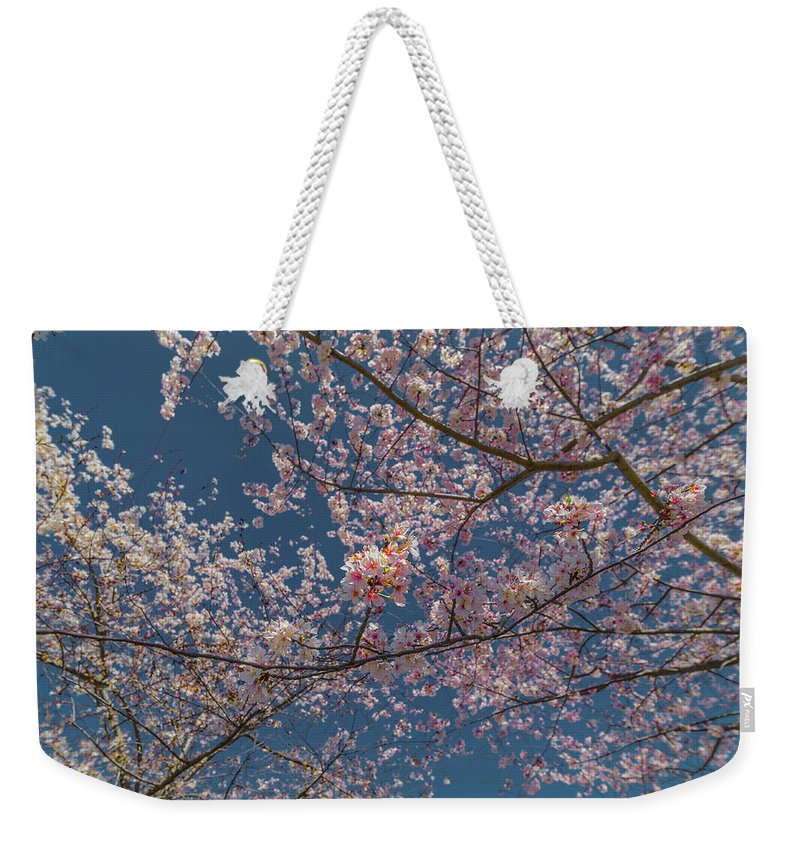 Flower Weekender Tote Bag featuring the photograph Cherry Blossoms In Bloom by C U Fotography
