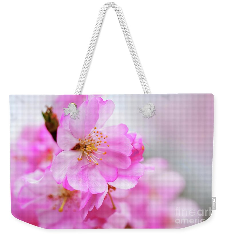 Cherry Blossoms Weekender Tote Bag featuring the photograph Cherry Blossoms Sweet Pink by Regina Geoghan