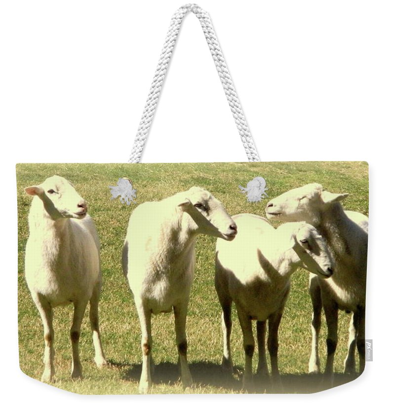 Animals Weekender Tote Bag featuring the photograph Cheviot Sheep by Kathy Barney