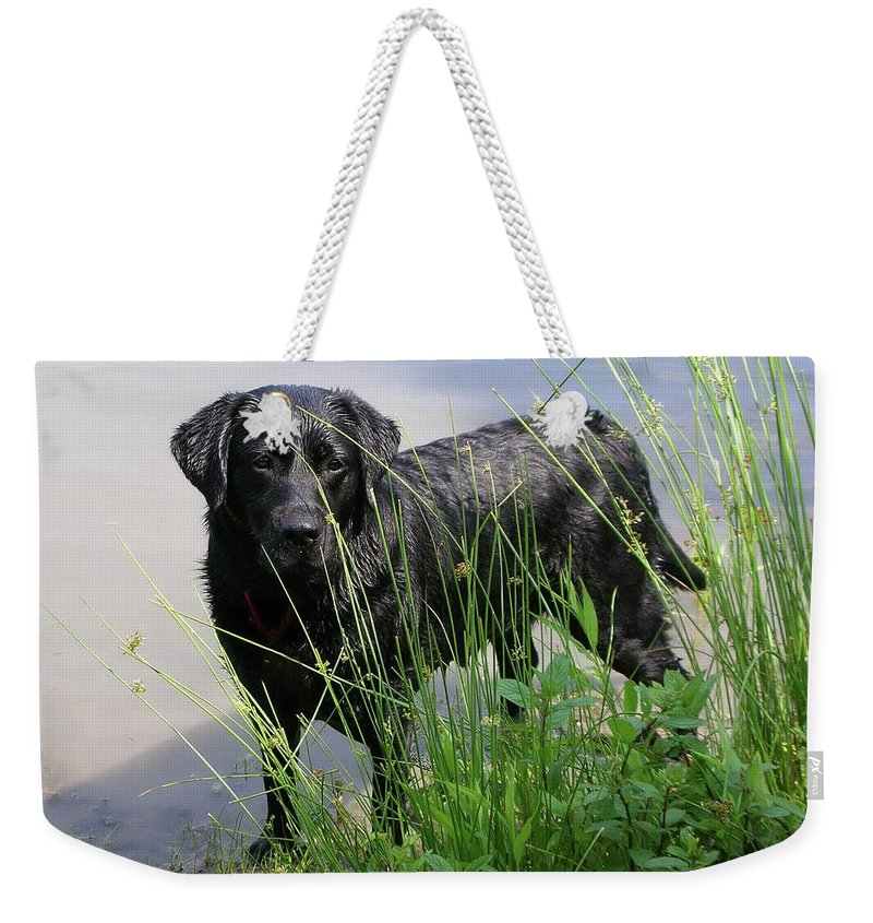 Animals Weekender Tote Bag featuring the photograph Chicago 0121 by Guy Whiteley