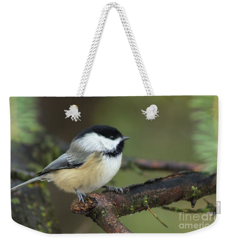Chickadee Weekender Tote Bag featuring the photograph Chickadee 1 by Cecille Gagne