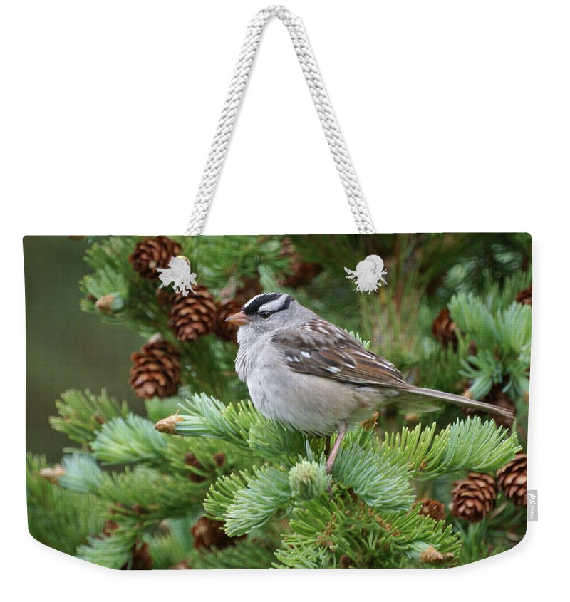 Chickadee Weekender Tote Bag featuring the photograph Chickadee by Heather Coen