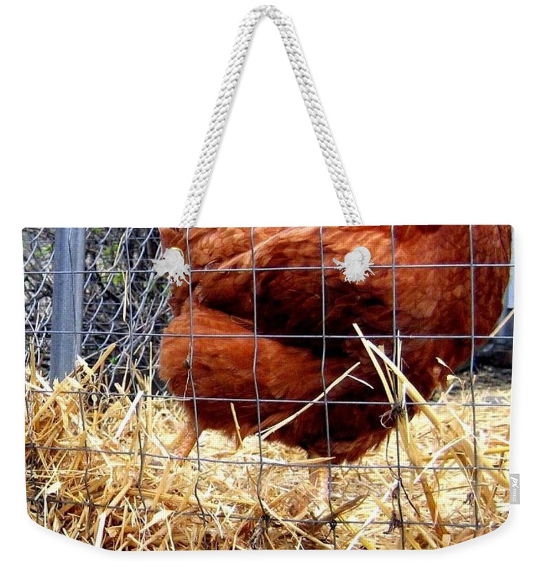 Chicken Weekender Tote Bag featuring the photograph Chicken In The Straw by Will Borden