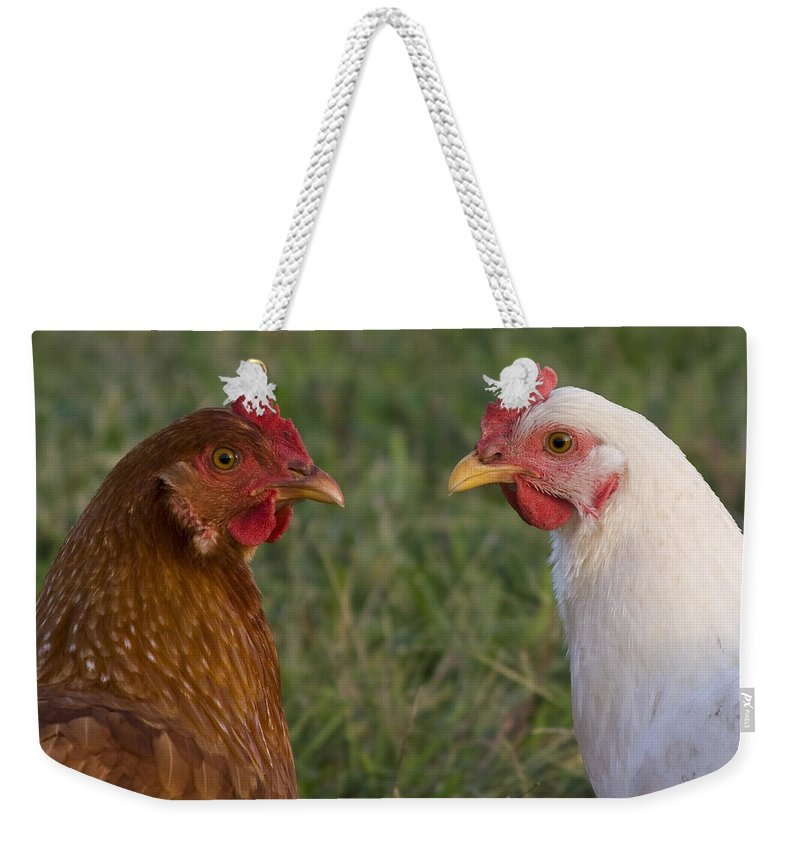 Chicken Hen Farm Rural Curious Bird Country Weekender Tote Bag featuring the photograph Chickens by Andrei Shliakhau
