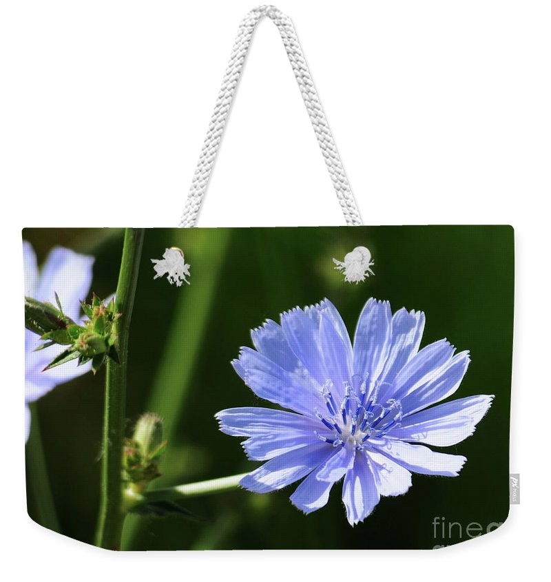 Chicory Weekender Tote Bag featuring the photograph Chicory by Lana Raffensperger