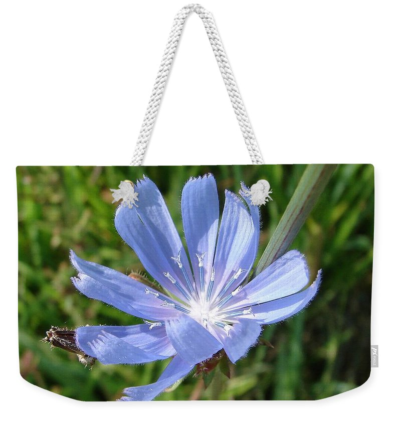 Blue Flower Green Weekender Tote Bag featuring the photograph Chicory by Luciana Seymour