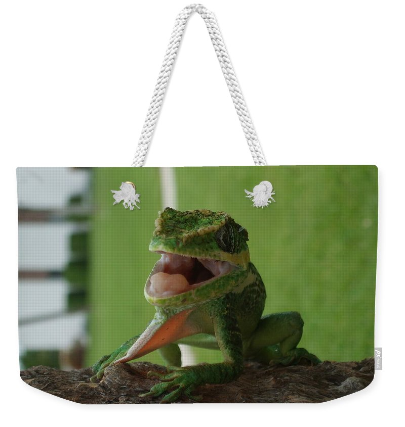 Iguana Weekender Tote Bag featuring the photograph Chilling On Wood by Rob Hans