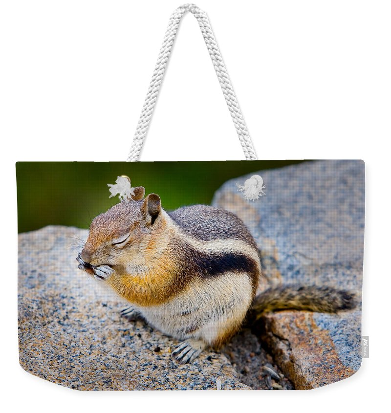 Squirrel Weekender Tote Bag featuring the photograph Chipmunk by James O Thompson