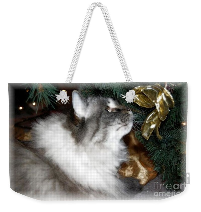 Christmas Weekender Tote Bag featuring the photograph Christmas Kitty by Debbi Granruth