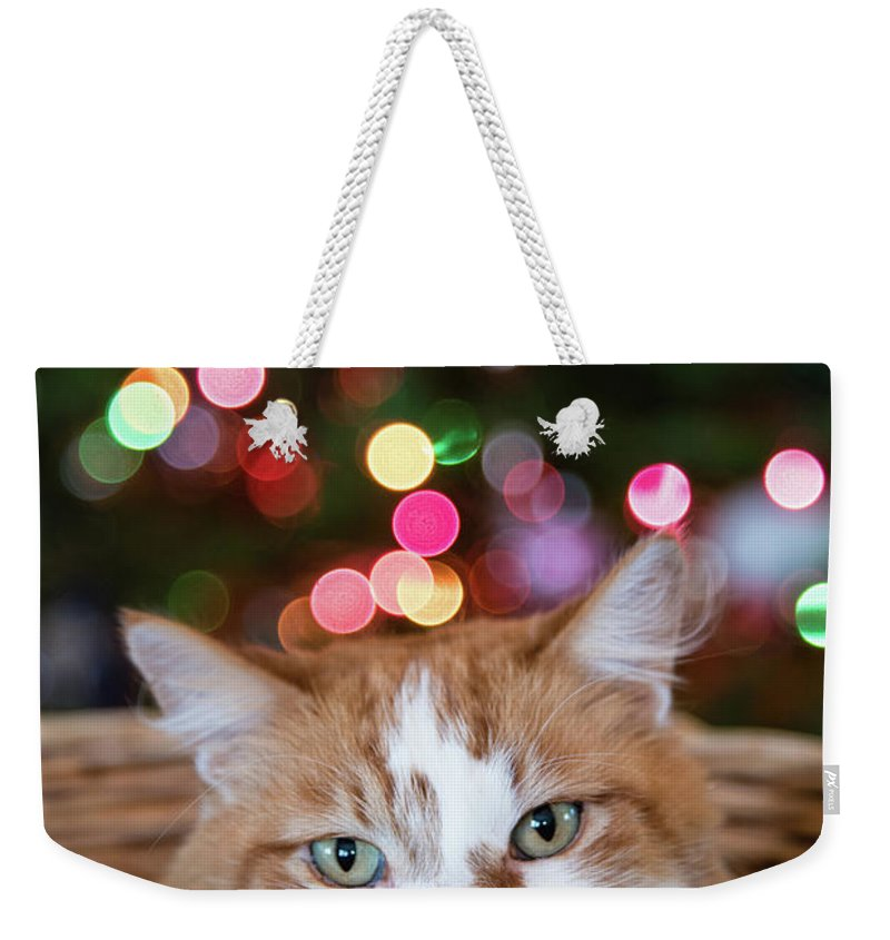 Closeup Weekender Tote Bag featuring the photograph Christmas Kitty In A Basket by David Prahl