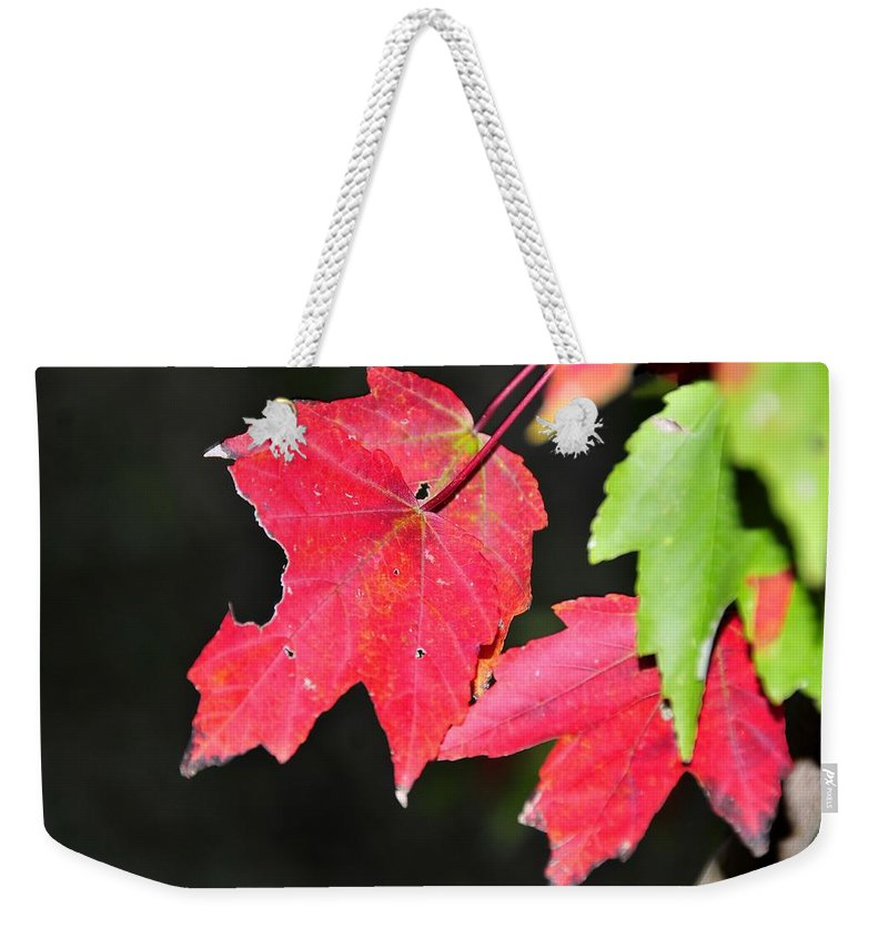 Leafs Weekender Tote Bag featuring the photograph Christmas Leafs by David Lee Thompson