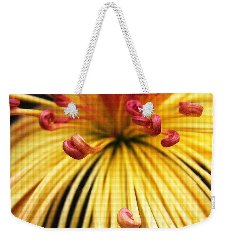 Chrysanthemum Weekender Tote Bag featuring the photograph Chrysanthemum Morning by Jessica Jenney