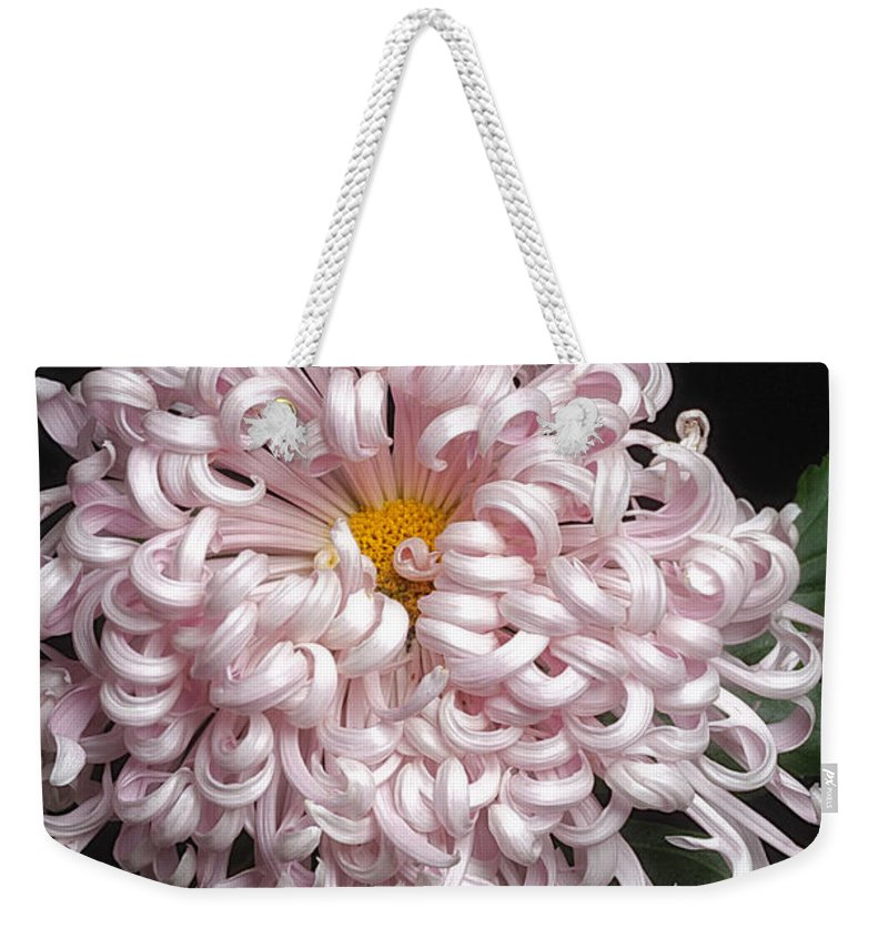Flower Weekender Tote Bag featuring the photograph Chrysanthenmum 'satin Ribbon' by Ann Jacobson