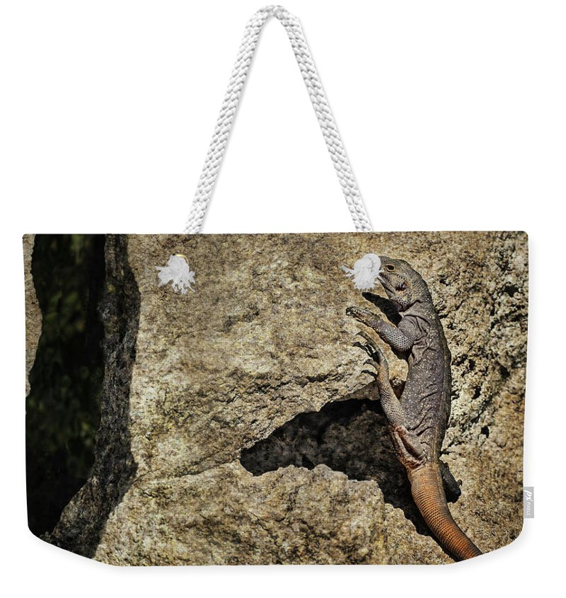 Lizard Weekender Tote Bag featuring the photograph Chuckwalla - Crevice by Nikolyn McDonald