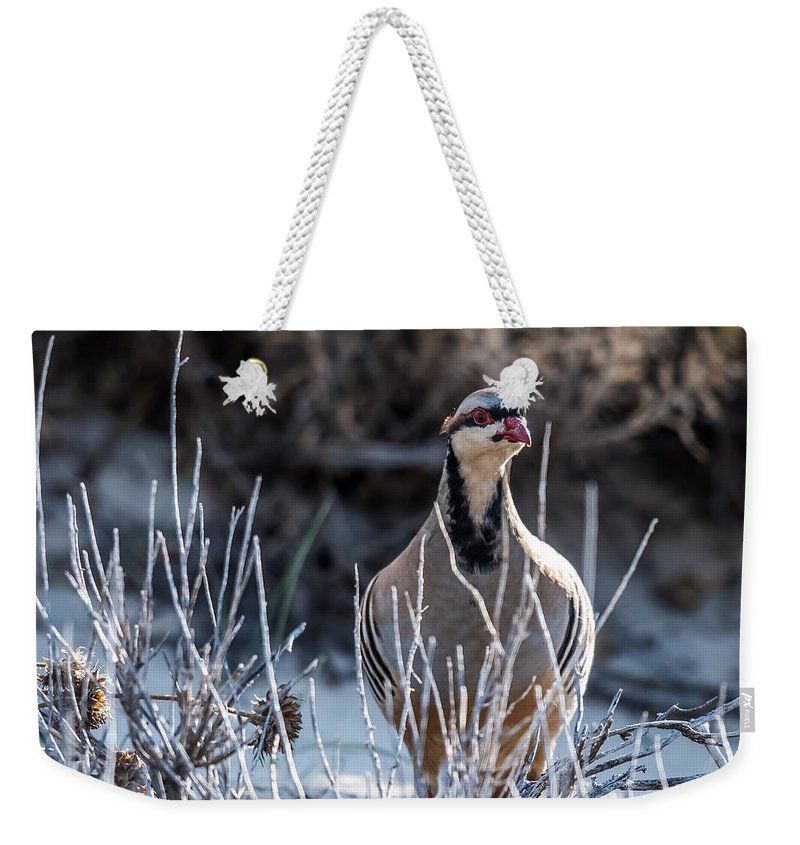Chukar Weekender Tote Bag featuring the photograph Chukar by Paul Freidlund