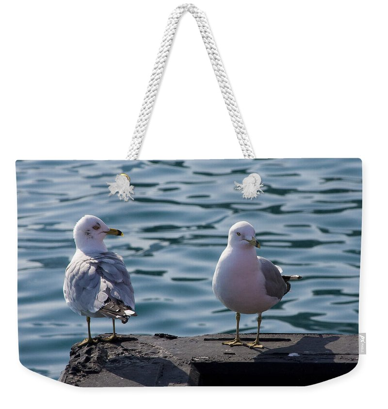Gull Gulls Seagulls Lake Michigan Chicago Windy City Bird Couple Wave Water Pier Feather Weekender Tote Bag featuring the photograph City Gulls by Andrei Shliakhau