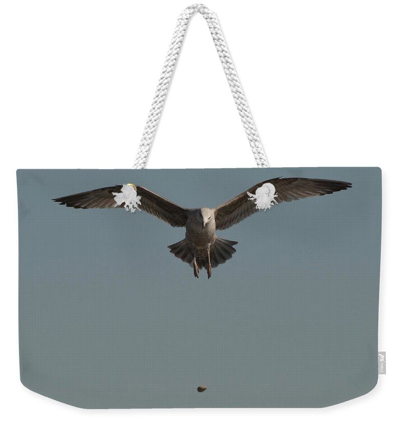 Seagull Weekender Tote Bag featuring the photograph Clams For Dinner 2 by Steven Natanson