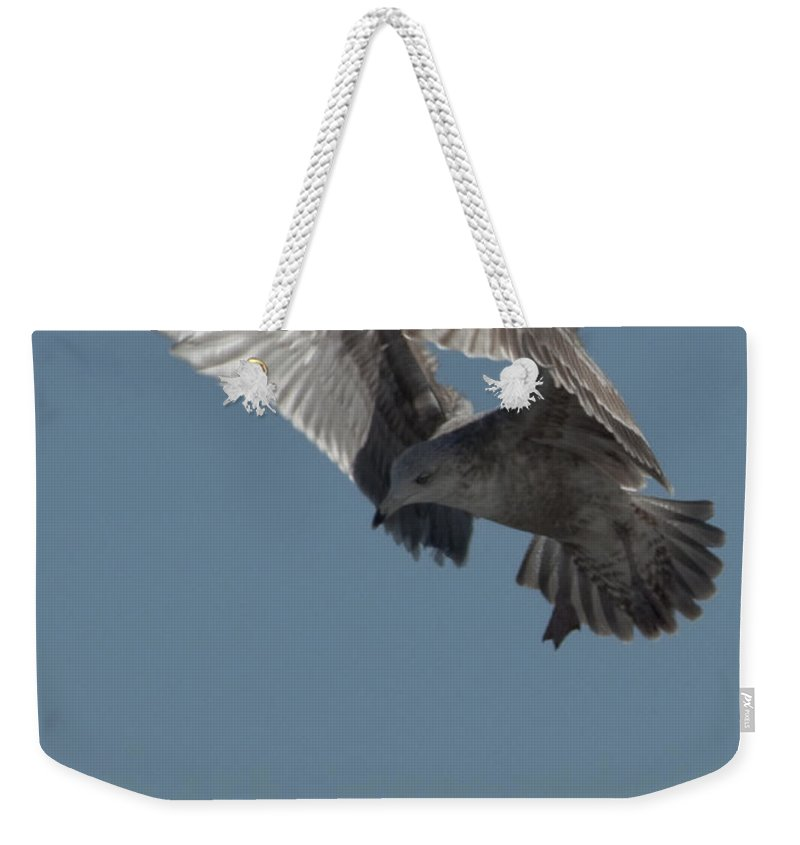 Seagull Weekender Tote Bag featuring the photograph Clams For Dinner 3 by Steven Natanson