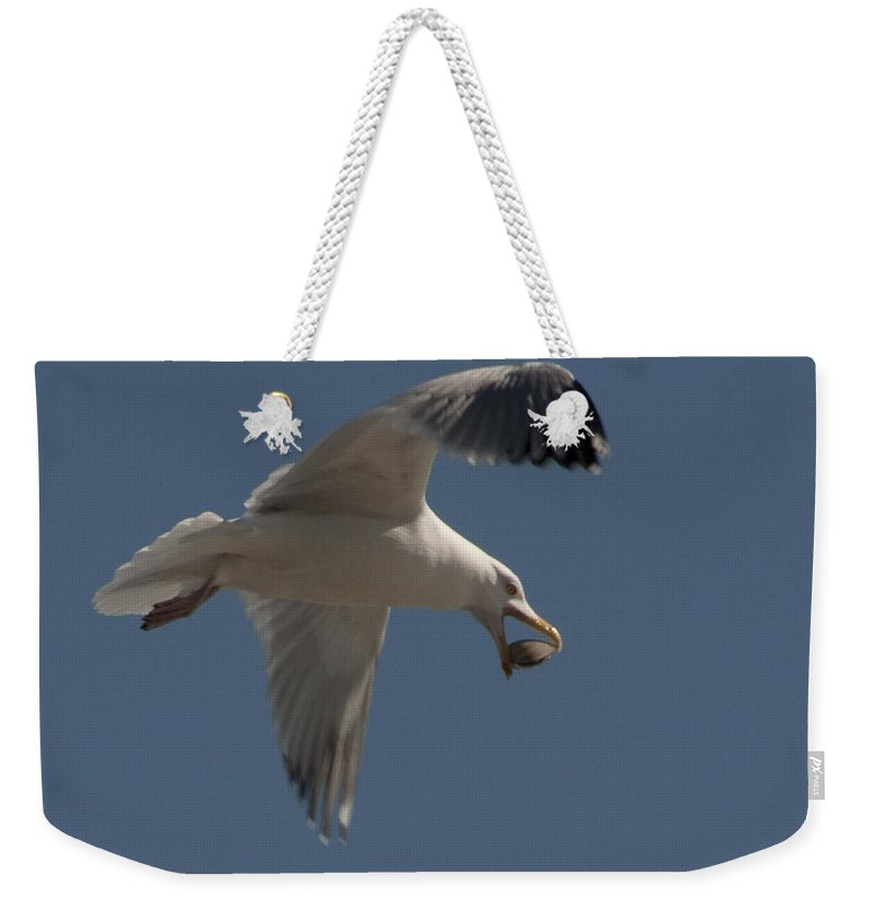 Seagull Weekender Tote Bag featuring the photograph Clams For Dinner by Steven Natanson