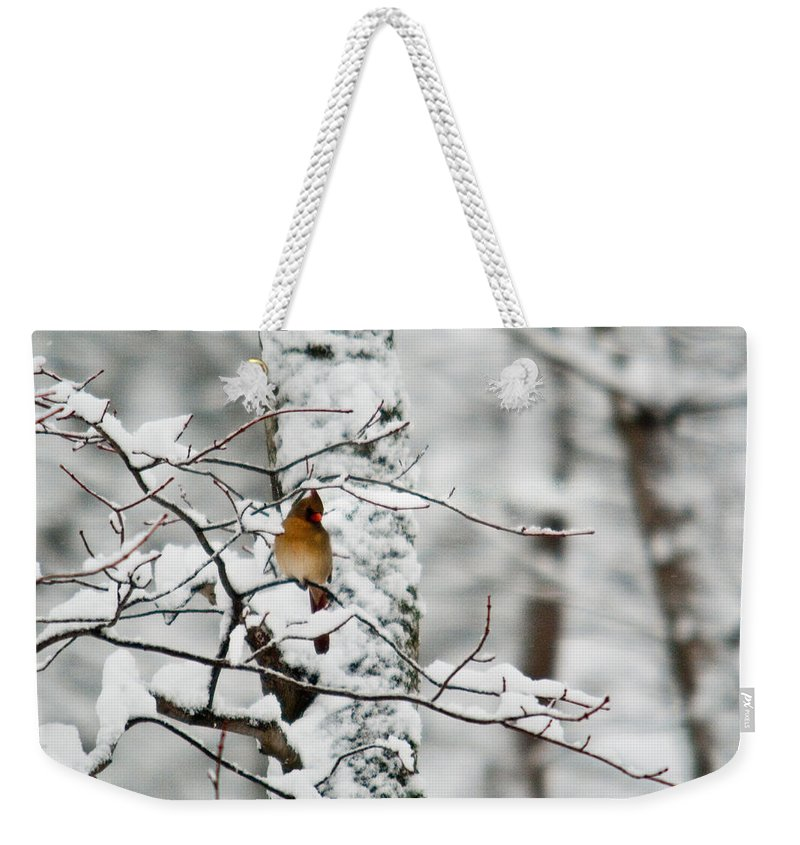 Cardinal Weekender Tote Bag featuring the photograph Classic Cardinal In Snow by Douglas Barnett