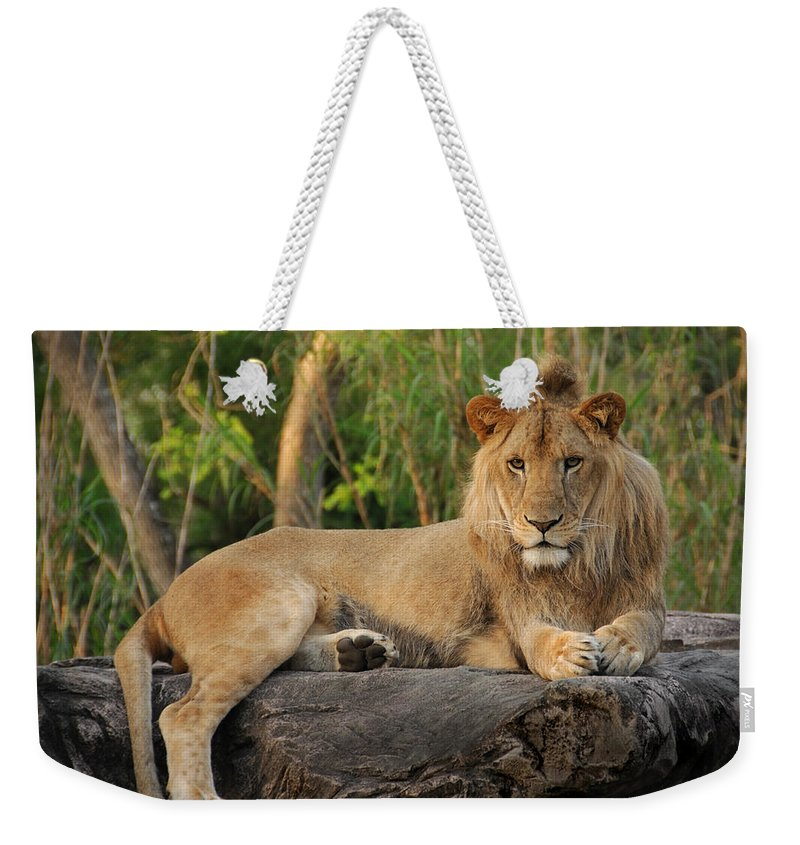 Lion Weekender Tote Bag featuring the photograph Classic Young Male by Steven Sparks