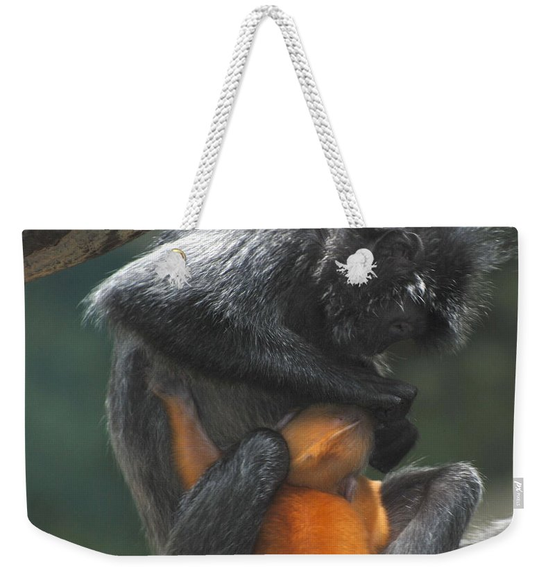 Monkey Weekender Tote Bag featuring the photograph Cleaning Baby by Richard Bryce and Family