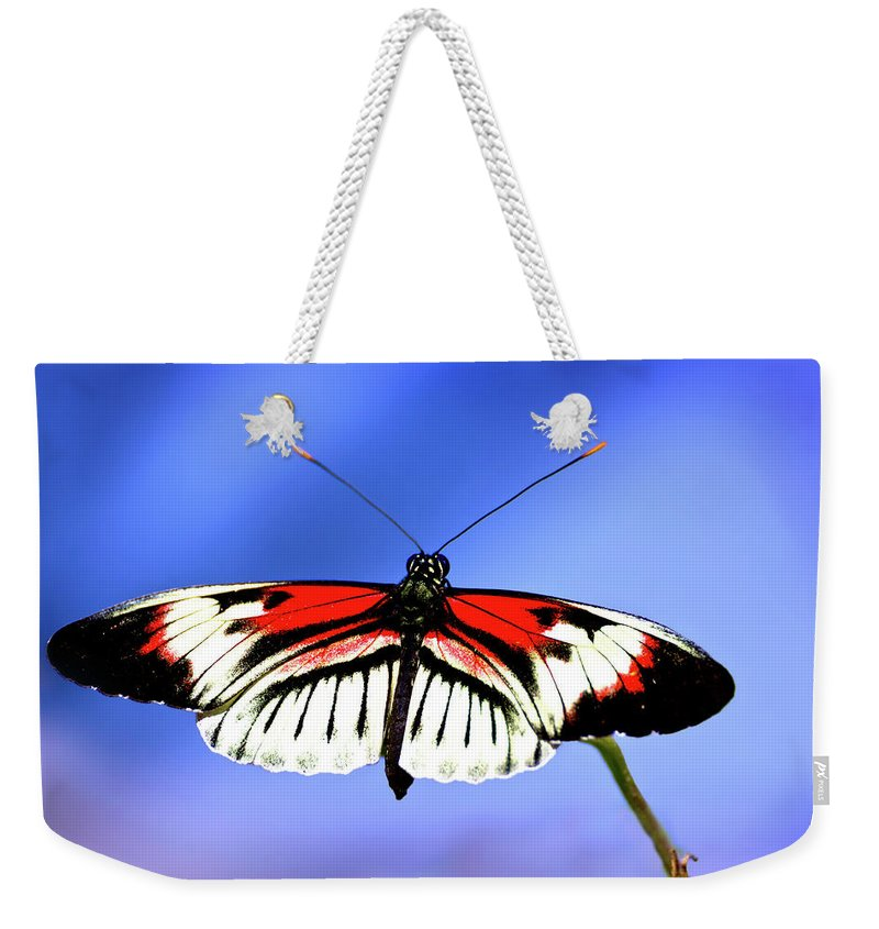 Butterfly Weekender Tote Bag featuring the photograph Cleared For Takeoff by Mark Andrew Thomas