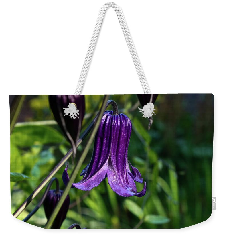 Clematis Weekender Tote Bag featuring the photograph Clematis Flower Blossoms by Douglas Barnett