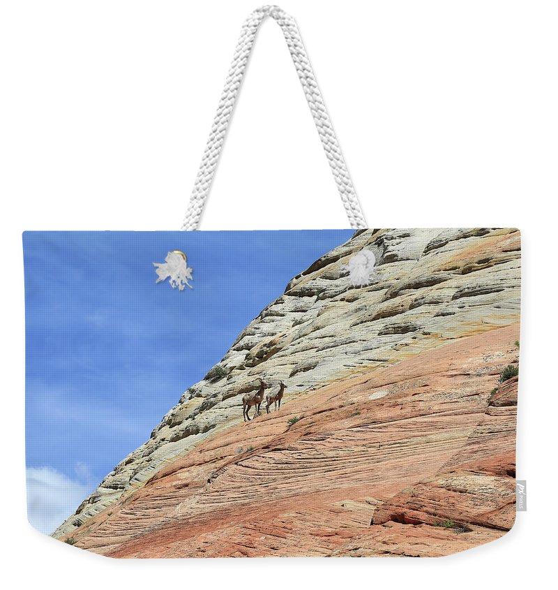 Ovis Canadensis Weekender Tote Bags