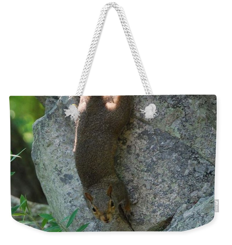 Squirrel Weekender Tote Bag featuring the photograph Cliff Hanger by Eric Liller