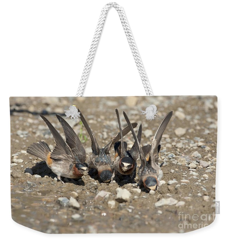 Cliff Swallows Weekender Tote Bag featuring the photograph Cliff Swallows Gather Mud by Marie Read