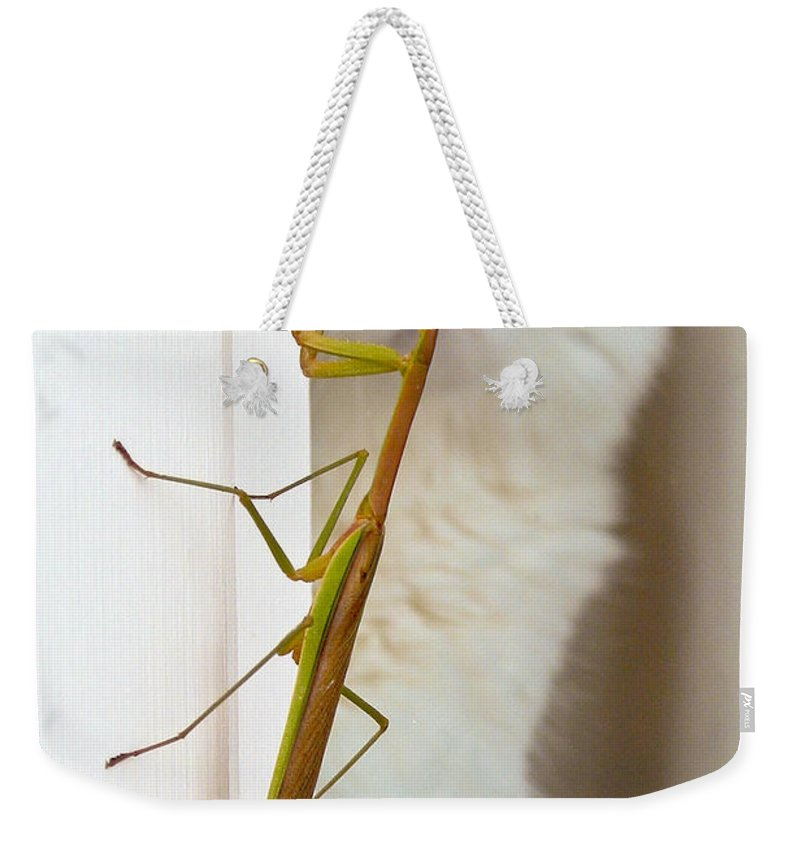 Cat Weekender Tote Bag featuring the photograph Close Encounter by Julie Niemela