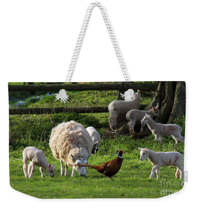 Pheasant Weekender Tote Bag featuring the photograph Close Encounter Of The Third Kind by Angel Tarantella