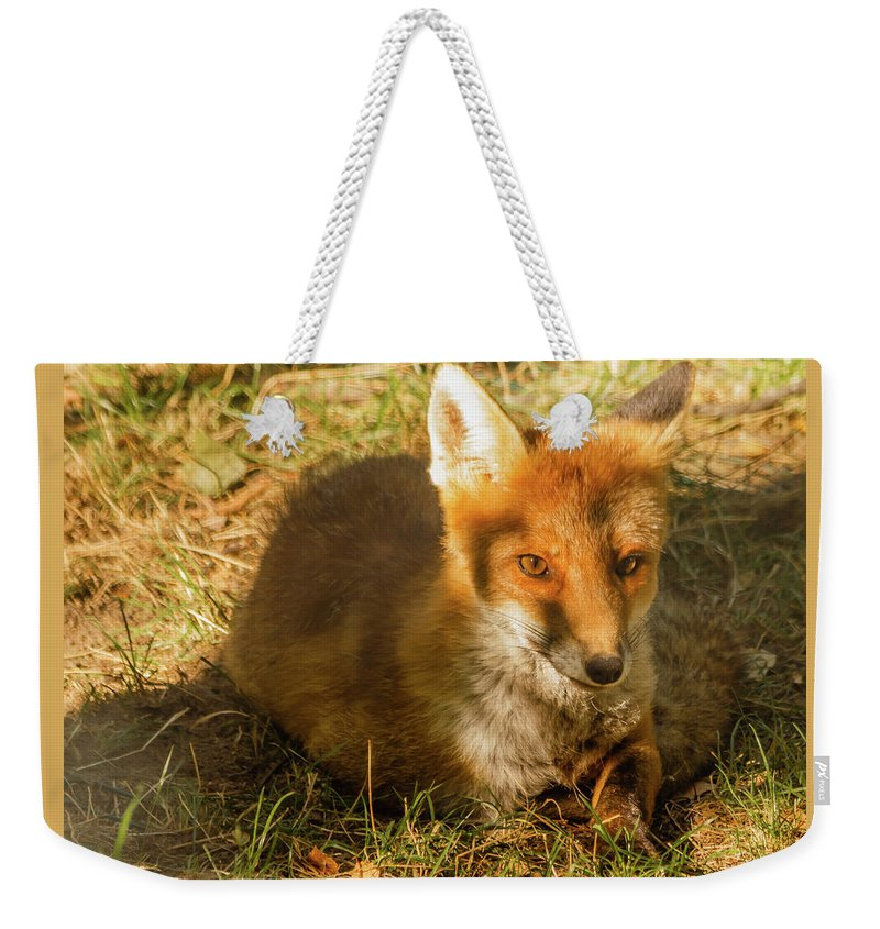 Animal Weekender Tote Bag featuring the photograph Close-up Of A Fox Resting In A Park by Susanna Mattioda