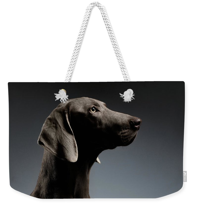 Dog Weekender Tote Bag featuring the photograph Close-up Portrait Weimaraner dog in Profile view on white gradient by Sergey Taran