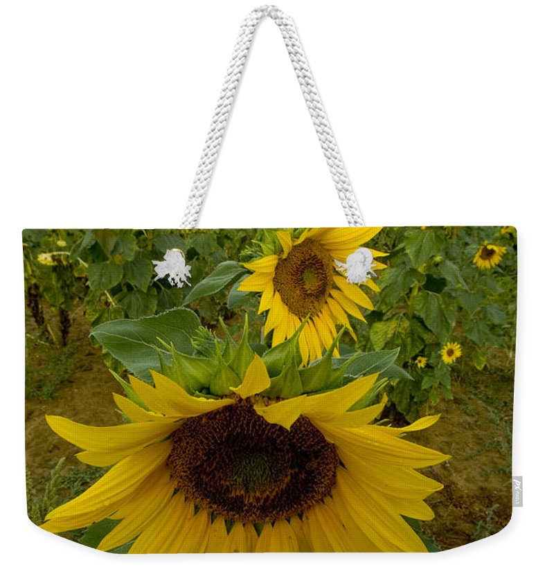 Sunflowers Weekender Tote Bag featuring the photograph Close View Of A Sunflower At The Edge by Todd Gipstein