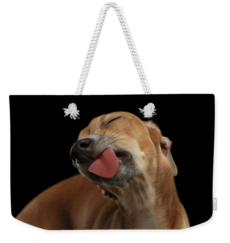 Greyhound Weekender Tote Bag featuring the photograph Closeup Cute Italian Greyhound Dog Licked with pleasure isolated Black by Sergey Taran