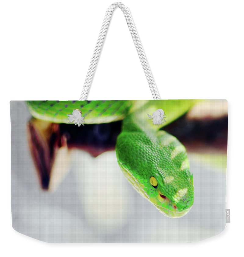 Green Weekender Tote Bag featuring the photograph Closeup Of Poisonous Green Snake With Yellow Eyes - Vogels Pit Viper by Srdjan Kirtic