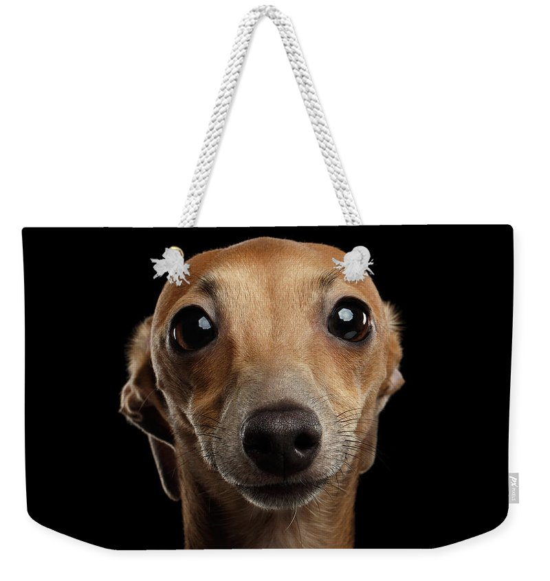 Greyhound Weekender Tote Bag featuring the photograph Closeup Portrait Italian Greyhound Dog Looking in Camera isolated Black by Sergey Taran