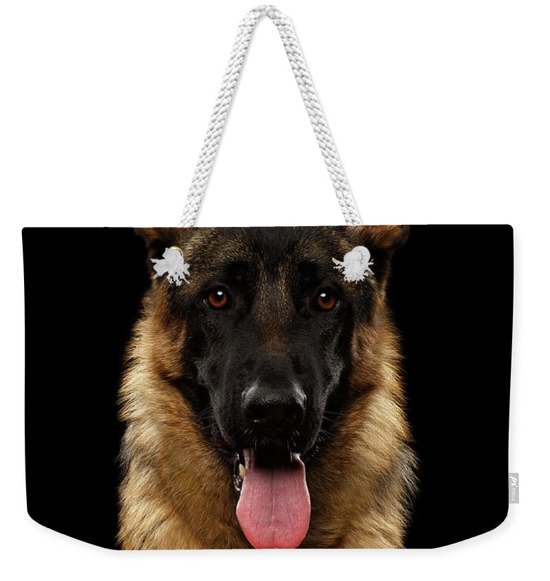 Dog Weekender Tote Bag featuring the photograph Closeup Portrait Of German Shepherd On Black by Sergey Taran