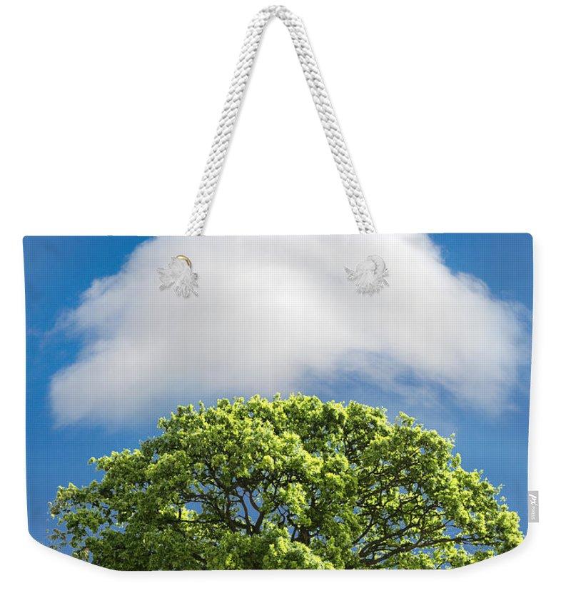 Tree Weekender Tote Bags