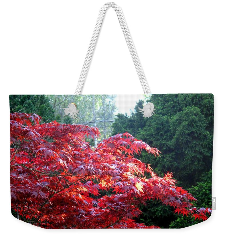 James Gardens Weekender Tote Bag featuring the photograph Clouds Of Leaves by Ian MacDonald