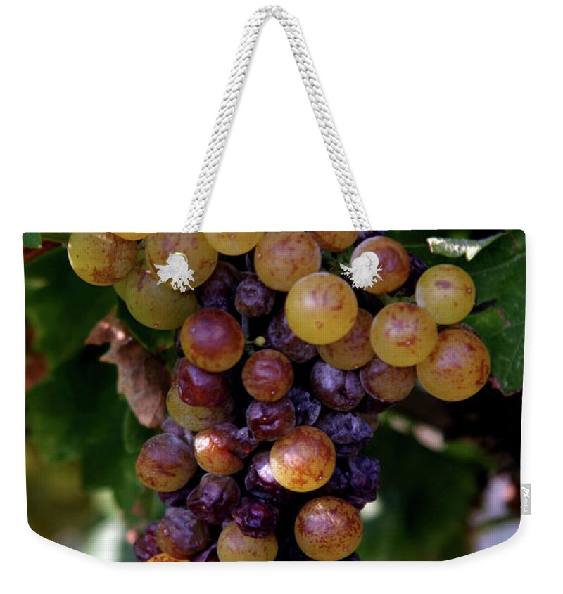 Grape Weekender Tote Bag featuring the photograph Cluster Of Ripe Grapes by Amos Dor