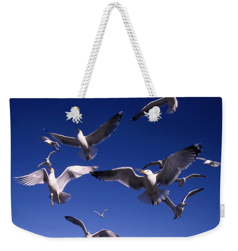 Seagull Birds Flight Weekender Tote Bag featuring the photograph Cnrg0302 by Henry Butz