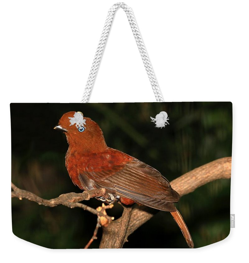 Bird Weekender Tote Bag featuring the photograph Female Cock Of The Rock by John Absher