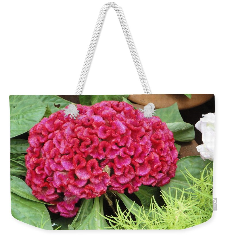 Flower Weekender Tote Bag featuring the photograph Cockscomb Flower by Usha Shantharam