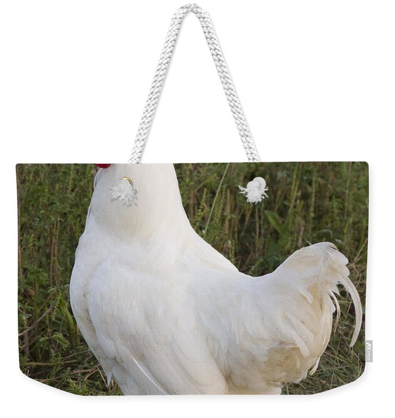 Rooster Chicken Bird White Farm Rural Red Grass Weekender Tote Bag featuring the photograph Cocky by Andrei Shliakhau