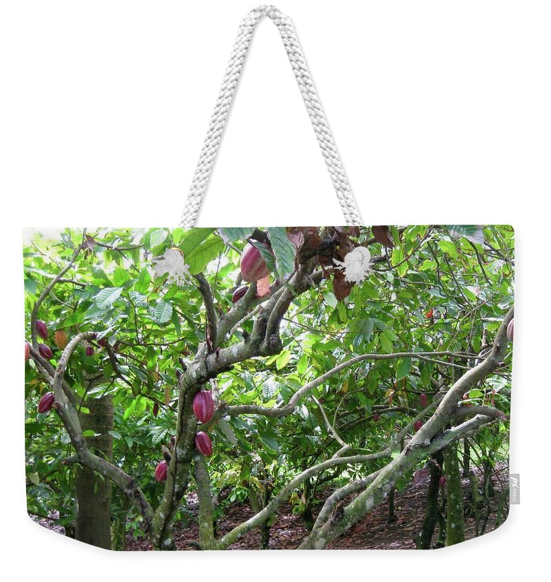 Cocoa Weekender Tote Bag featuring the photograph Cocoa Tree With Ripe Cocoa Pods by Cynthia Iwen